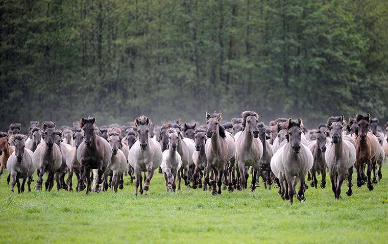 Bildresultat för flock hästar